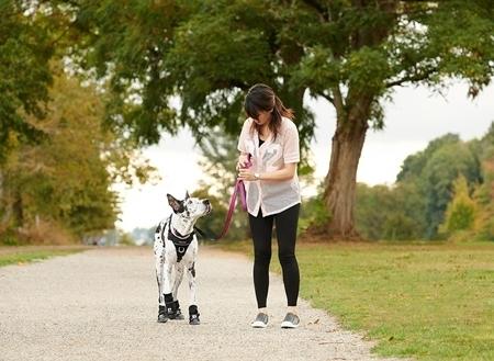Strider Dog Boots