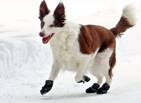 Winter Dog Boots