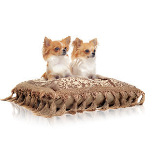Comfortable Pet Bed for Dogs