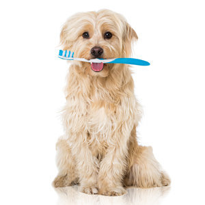 Dental Care for Dogs