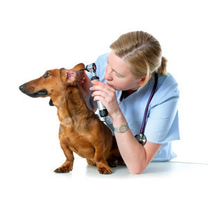 Ear Care for Dogs