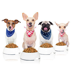 Feeding Your Dog with Balanced Dog Food